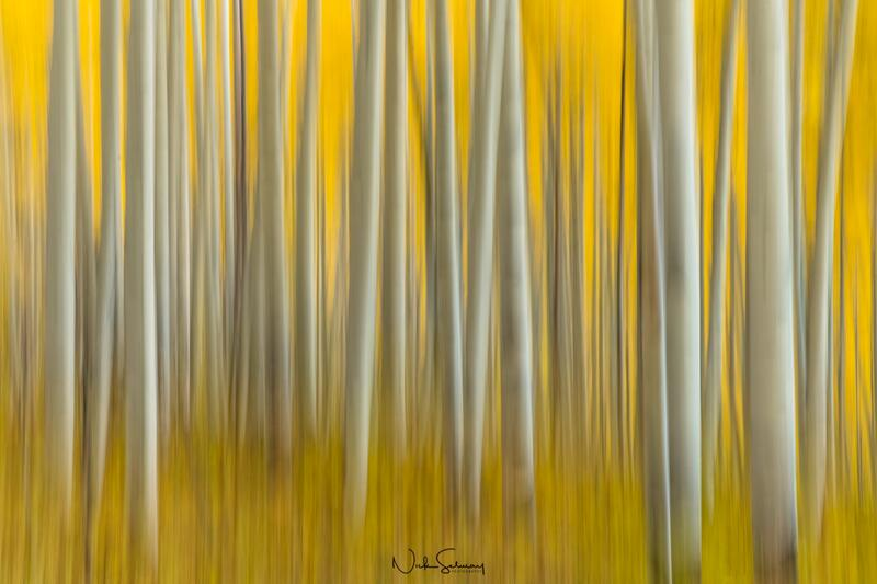 Abstract Aspen Photography for Sale