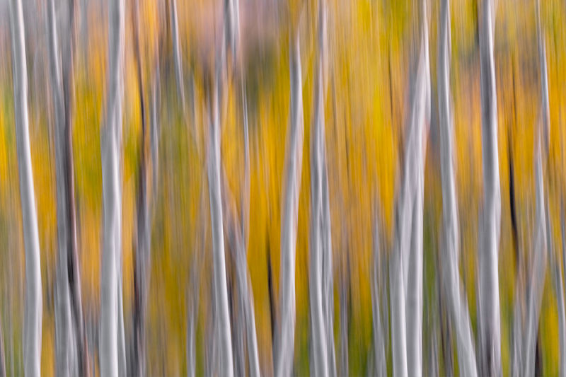 Forest Motion