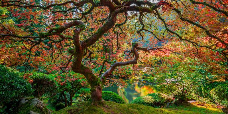 Garden of Zen Panoramic