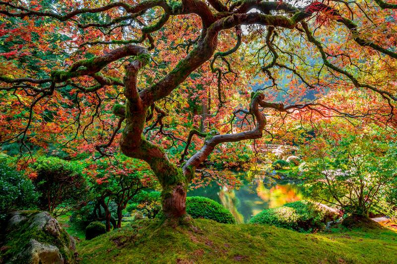 Large Scale Photo of Zen Garden in Portland