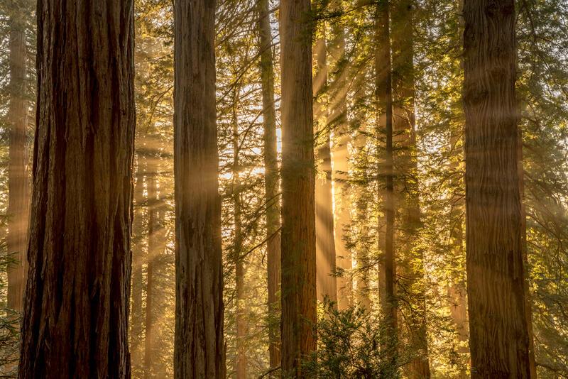 California Nature Photography