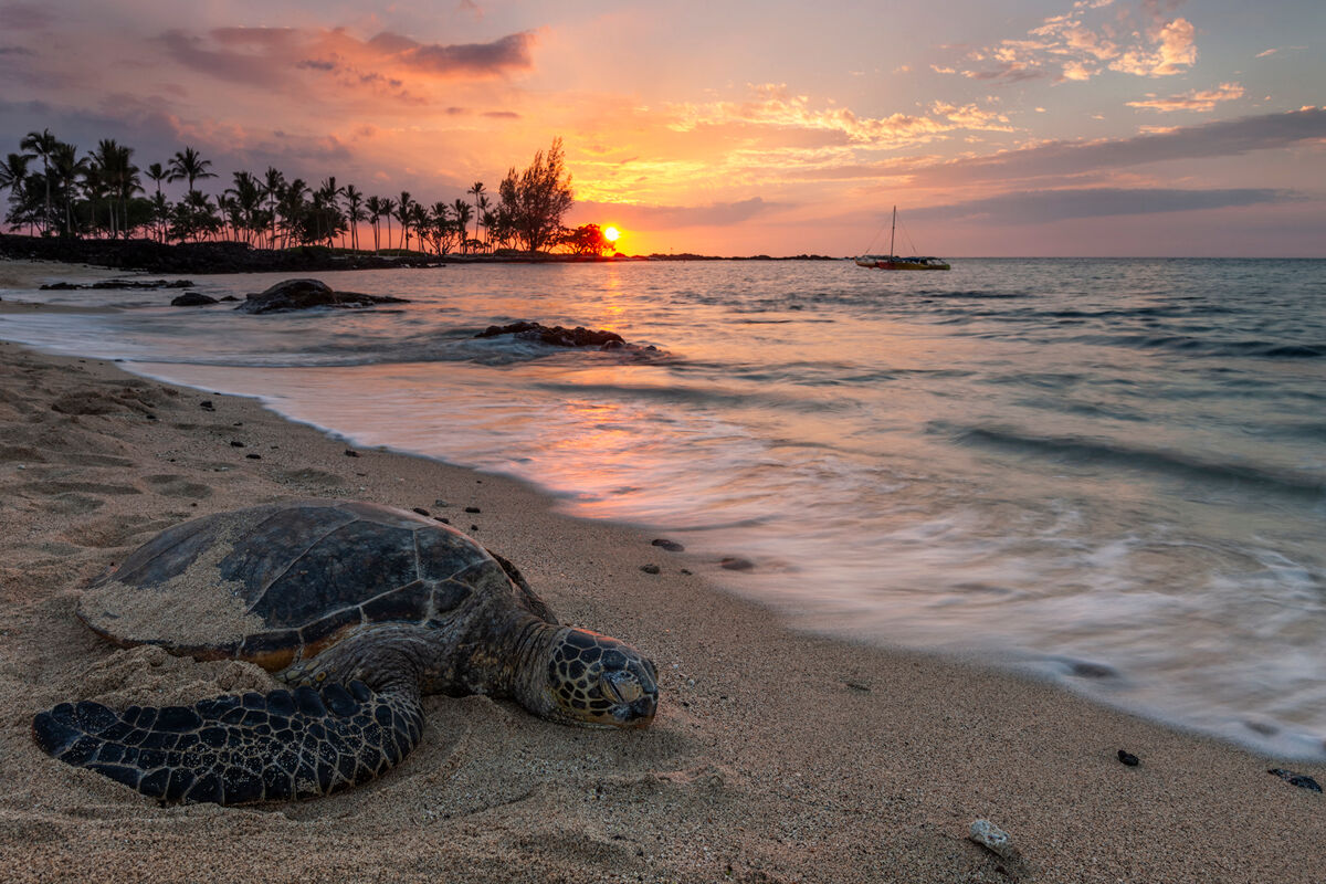 Hawaii is a place for relaxation and peace as you can see this turtle know how to do that.