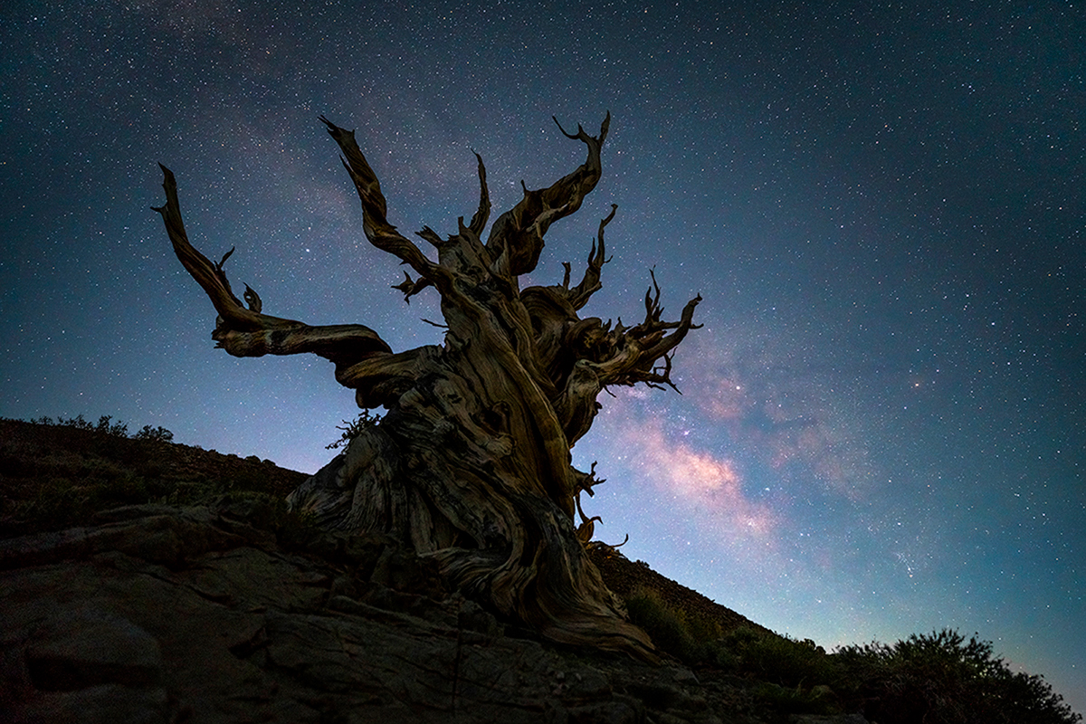 The Ancient Bristlecone Pine Forest is a protected area high in the White Mountains in Inyo County in eastern California. These...