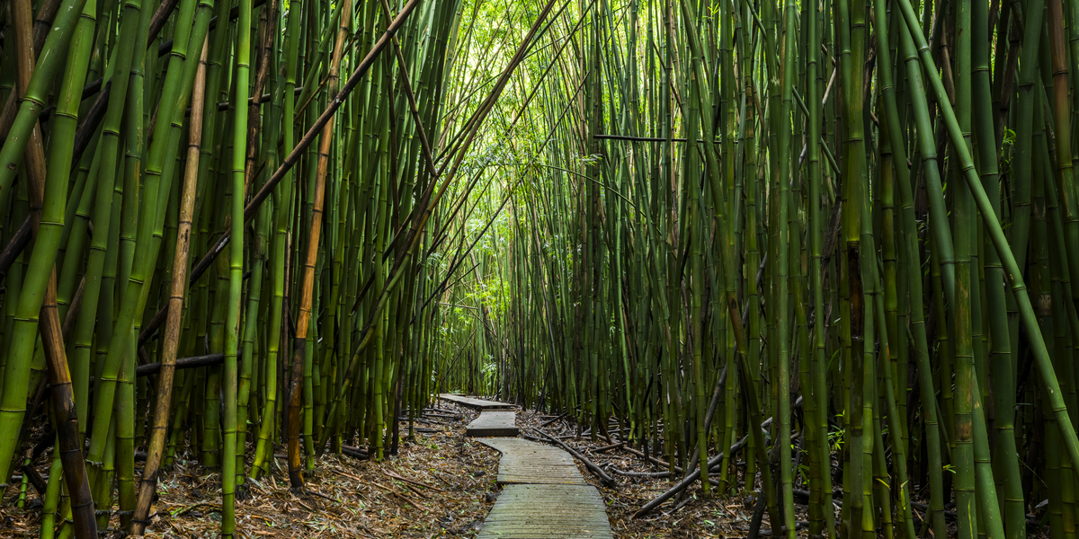 The Pipiwai Trail is located in southeast Maui. It's within Haleakala National Park in the area called Kipahulu. The Pipiwai...