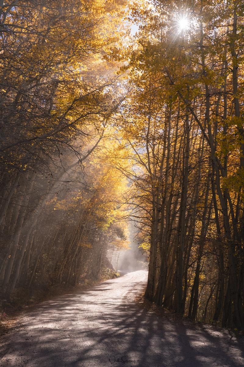 Aspen Tree Leaves Image for Sale