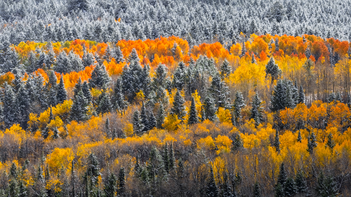After a Winter storm I came across this beautiful Fall Color scene covered in fresh snow just outside Jackson Hole,Wyoming.